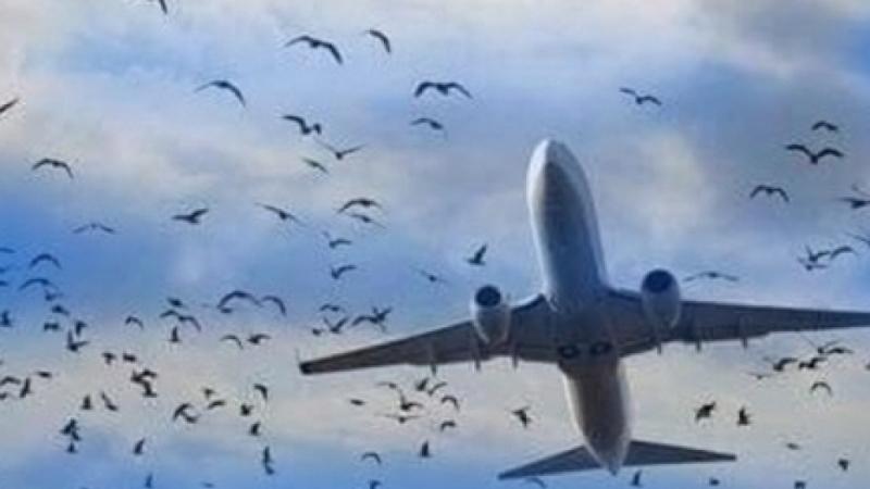 طيور تجبر طائرة على الهبوط اضطراريا