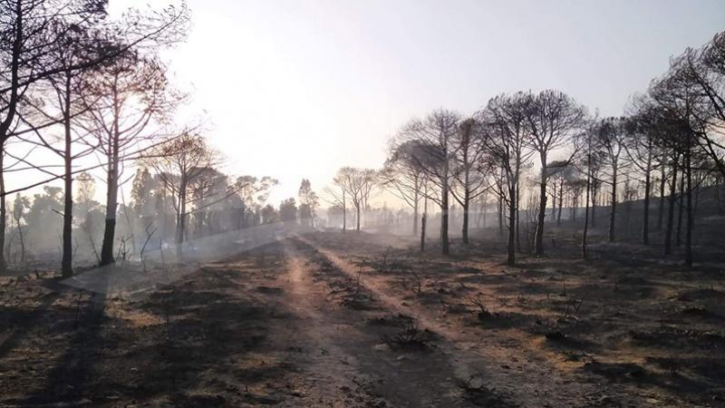 تواصل المحاولات لإطفاء حريق اندلع بجبل صباح