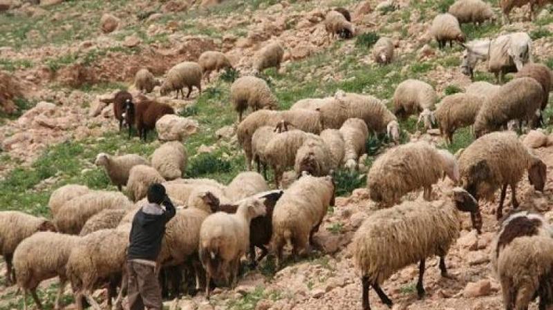 الجزائر: إرهابيون يغتالون راعي غنم
