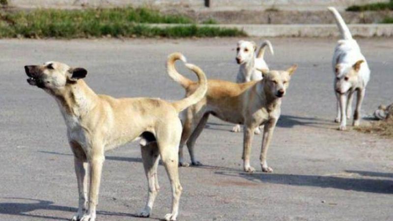 هلع ورعب في المدينة الجديدة بسبب الكلاب السائبة