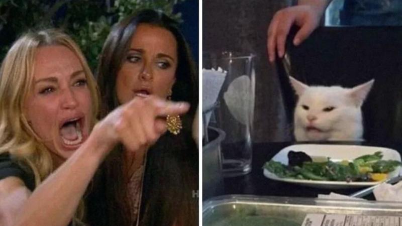 قصّة القط المُمتعض في الميم الشهير وإمرأة تصرخ في وجهه