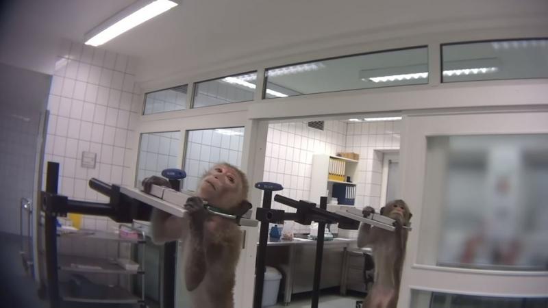 فضيحة تهزّ مختبرا في ألمانيا: معاملة وحشية لحيوانات تفضحها