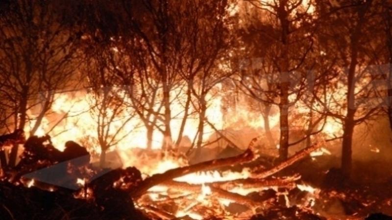 حريقان في جبلين في باجة
