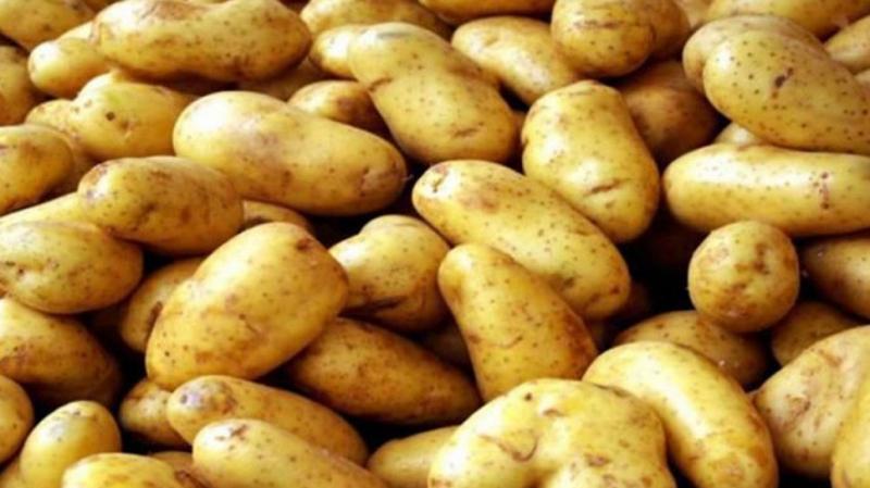 سوسة: محاضر عدلية ضد 'المستولين' على 'البطاطا'