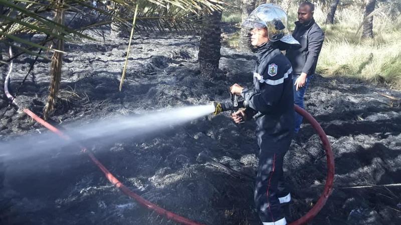 حامة الجريد: حريق يأتي على 75 من أصول النخيل