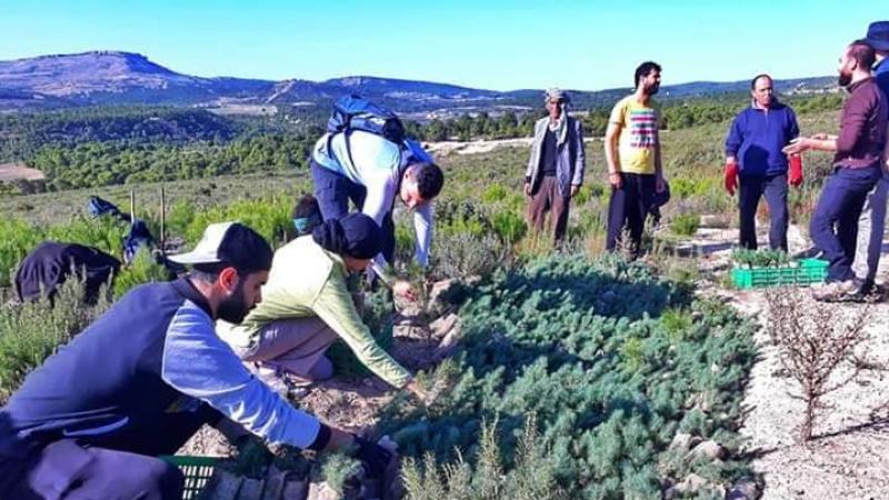 سليانة: زراعة آلاف الأشجار تخليدا لذكرى ضحايا حادث عمدون