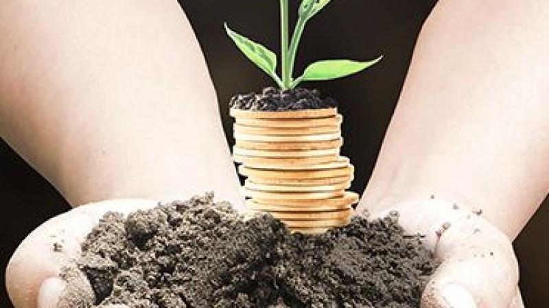 ارتفاع حجم الاستثمار الفلاحي الخاص