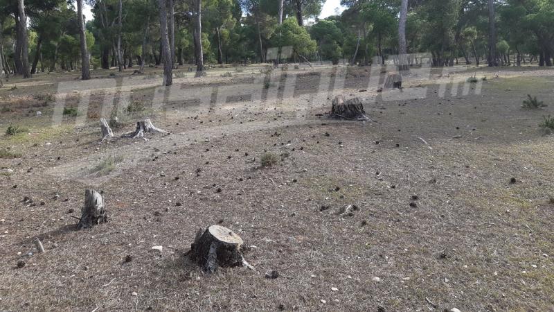 العيون: إتلاف أشجار يفوق عمرها الـ100 سنة..