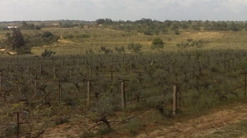 المنستير: استرجاع 986 هكتارا من الأراضي الدولية الفلاحية