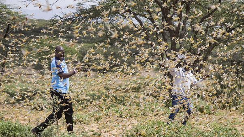 بسبب الجراد..الأمم المتحدة تحذر من مجاعة محتملة في شرق إفريقيا