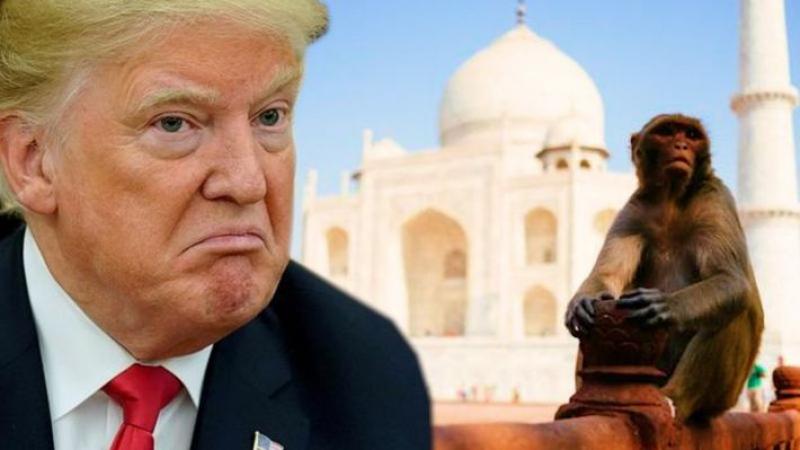الهند: مخاوف من تعرّض ترامب لهجوم من قبل القردة