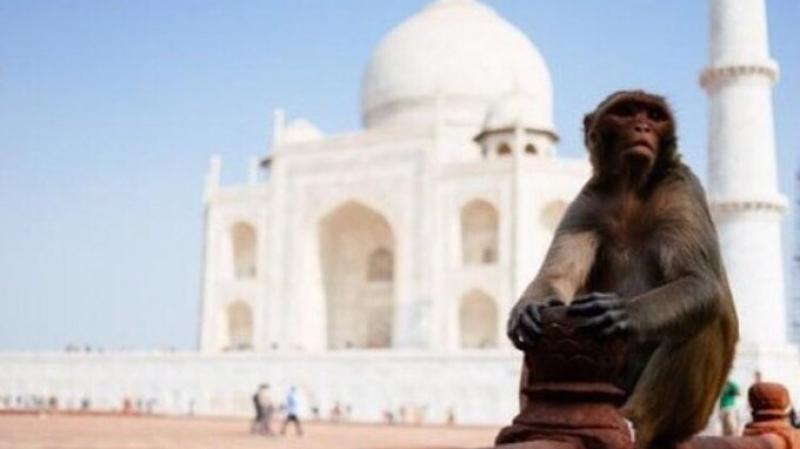 الهند تعزل الحيوانات لإبعادها عن طريق ترامب !