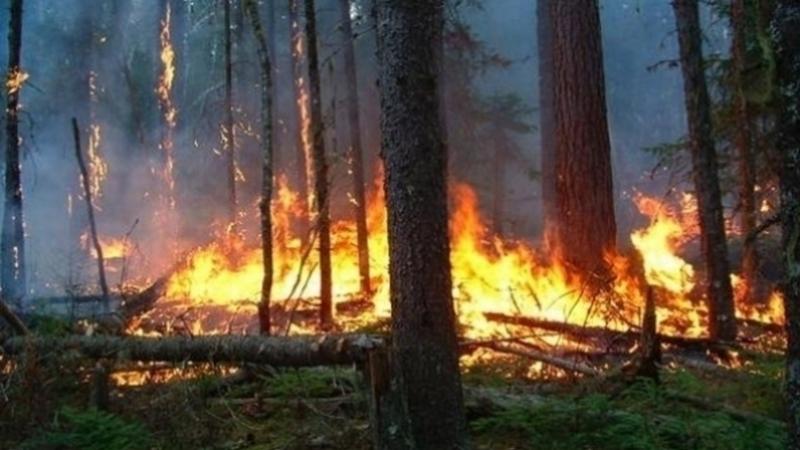 عقوبات حرائق الغابات: خطايا وسجن.. والإعدام في هذه الحالة