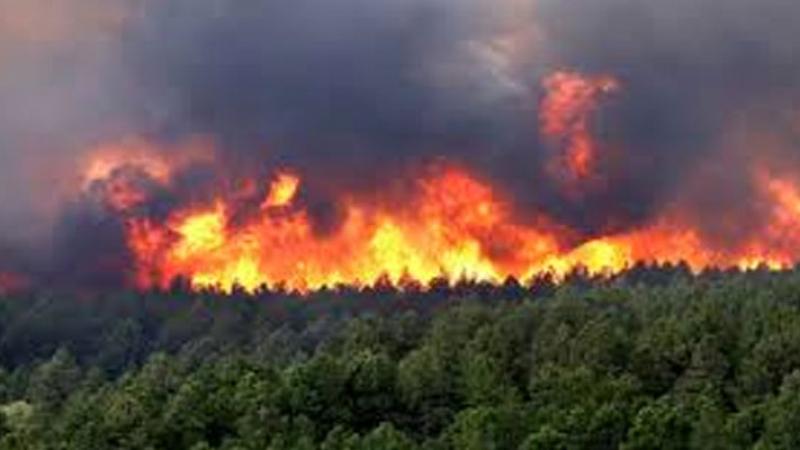 أتى على حوالي 6 هكتارات ..إخماد حريق سبيطلة