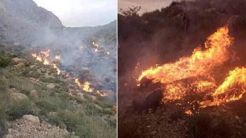 سيدي بوزيد: حريق هائليأتي على 7 هكتارات من الحلفاء