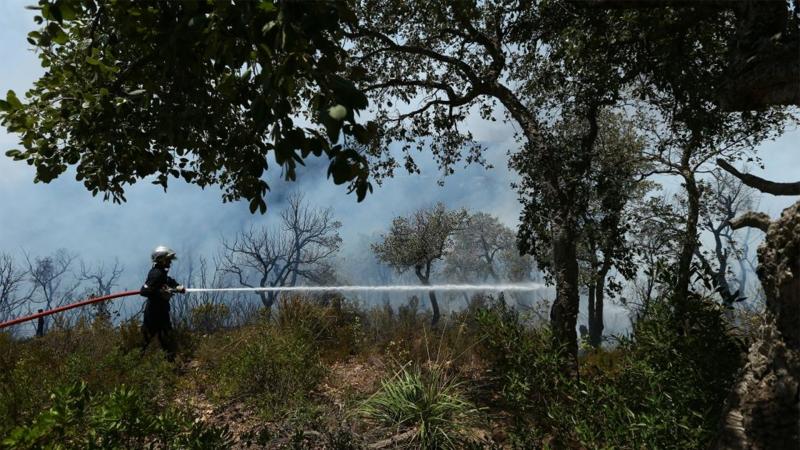 سوسة: السيطرة على حريق اندلع في أرض زيتون