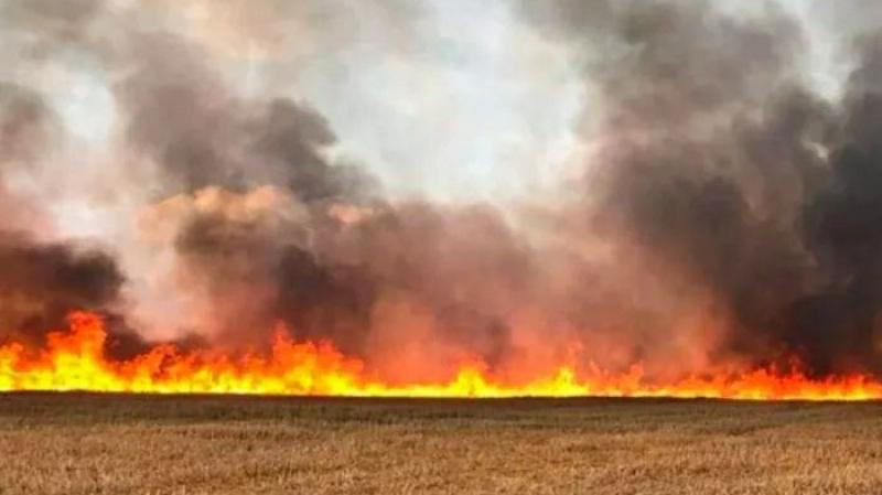 باجة: حريق يأتي على 16 هكتارا من الحبوب