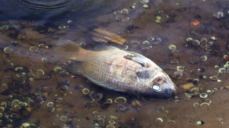 نفوق الأسماك فيصيادة: صدور النتائج النهائية للتحاليل