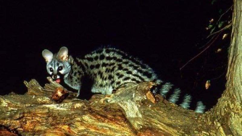 هلع في سيدي بوزيد: حيوان يفتك بالمواشي ليلا