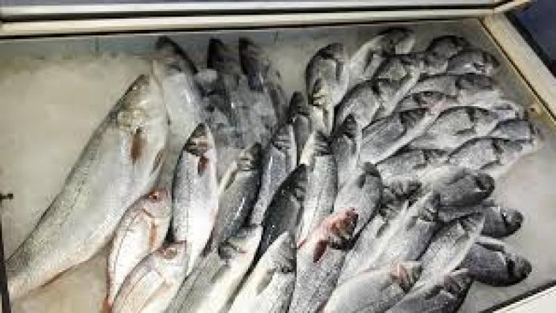 مساكن: تسمم 14 شخصا بسبب السمك الأزرق ''الغزال''