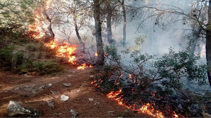 الكاف: حريقان بجبلي كشيريد وبلوط