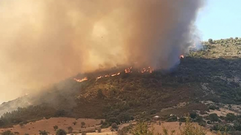 بعد سمّامة والسلّوم وتيوشّة.. الحرائق تصل جبلي الشعانبي ومغيلة