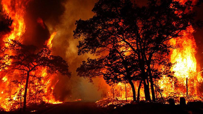 القصرين: تواصل إشتعال النيران في خمس مناطق جبليّة
