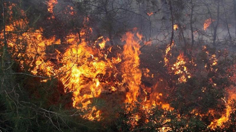 أغلبها متزامنة: 18 حريقا في ولايات مختلفة خلال فترة العيد