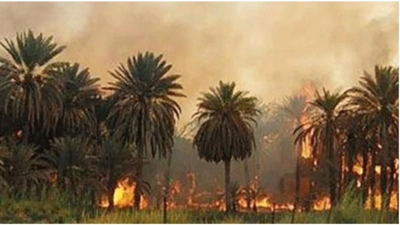 اندلاع 215 حريقابواحات توزرفي غضون شهرين