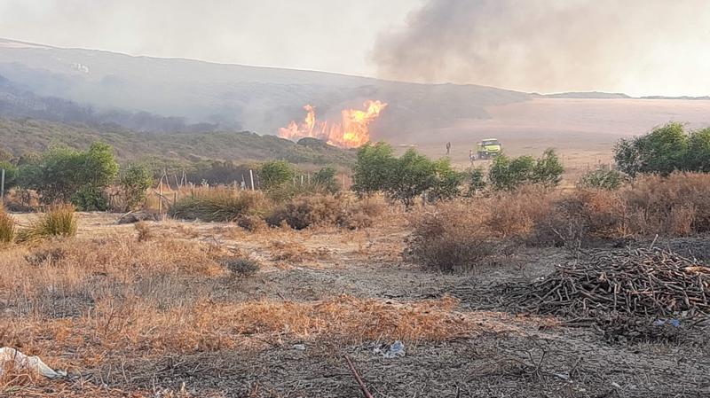 حريق يأتي على 20 هكتار من الغابة الشعراء ببنزرت الجنوبية