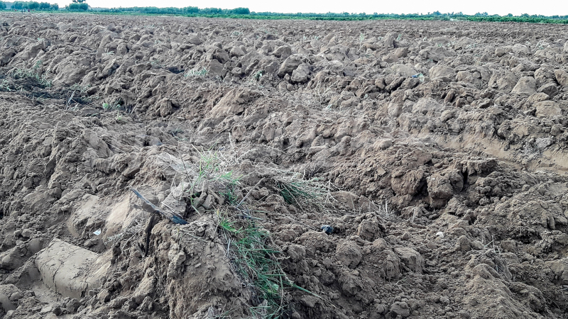 القيروان: غياب الأسمدة يسبّب في تأخر انطلاق موسم زراعة الحبوب