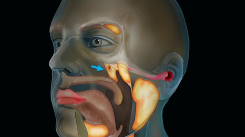 باحثون يكتشفون أعضاء جديدة في رأس الإنسان