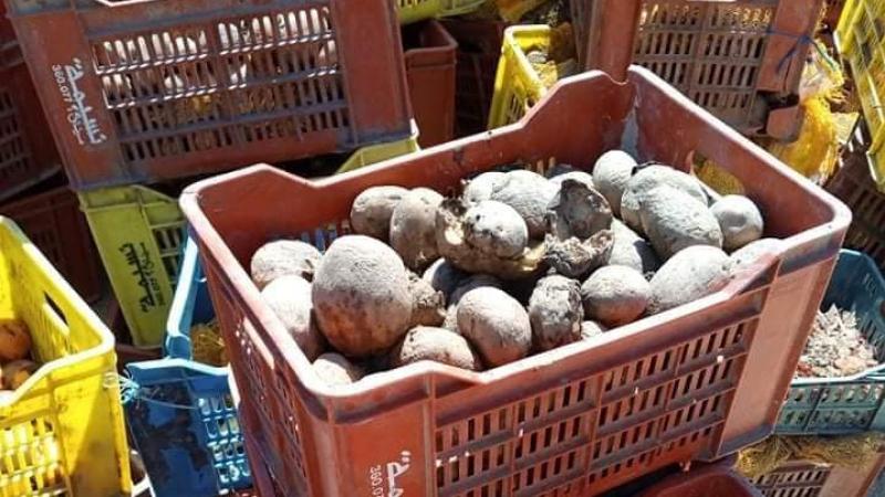 قابس: حجز وإتلاف أكثر من 10 أطنان من البطاطا الفاسدة
