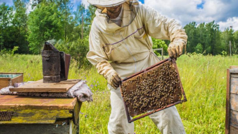 جندوبة: قطب لتطوير تربية النحل بتمويل من الإتحاد الأوروبي