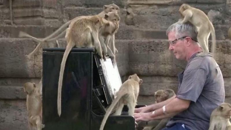 حفلٌ موسيقيّ لقرود جائعة..