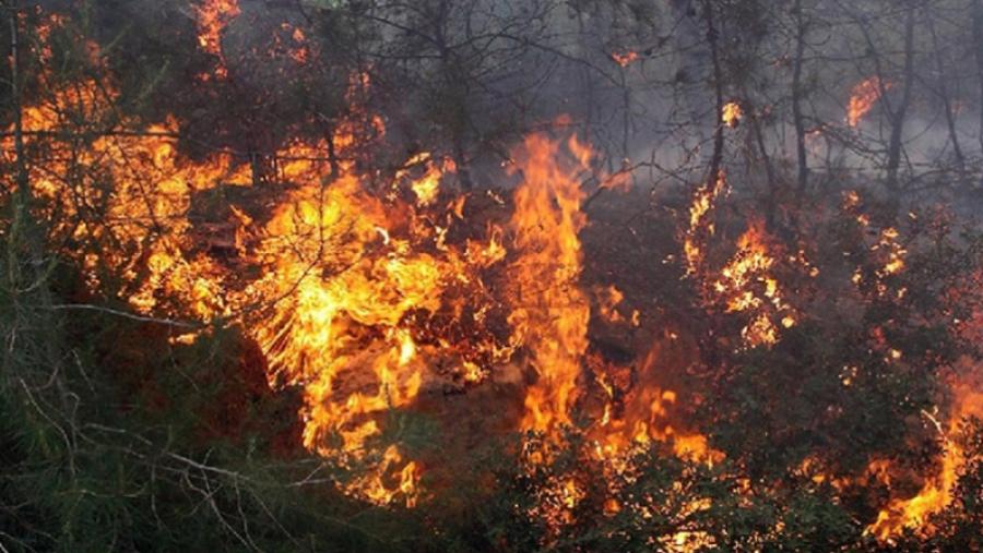 سليانة : اندلاع حريق بجبل سريو بالكريب