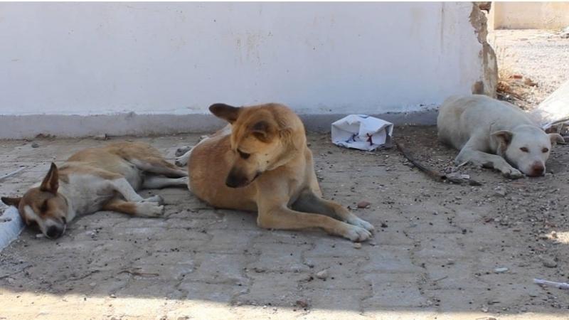 Bien-tre des personnes ges et chiens de compagnie