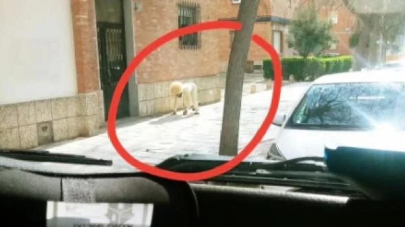 Confinement : Il se déguise en chien pour sortir de chez lui