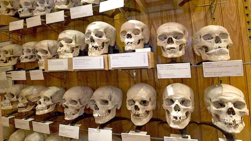 crânes de combattants algériens