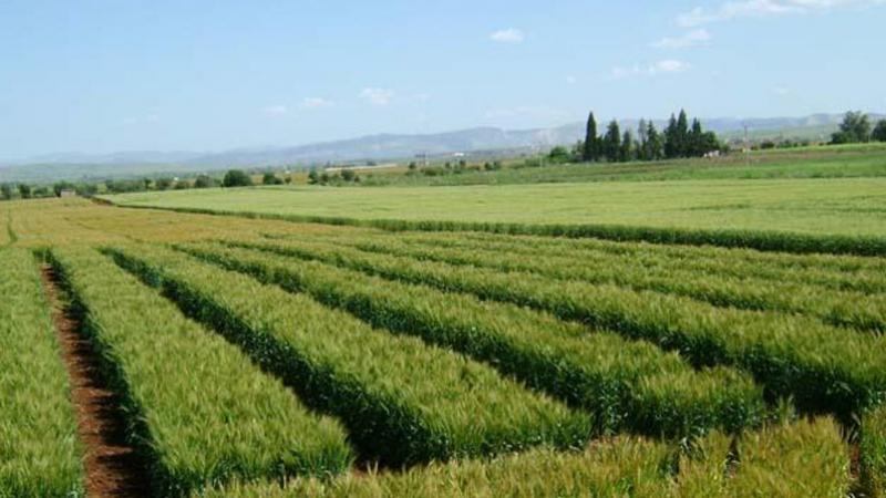 Démarrage du programme d'exploitation des terres domaniales agricoles