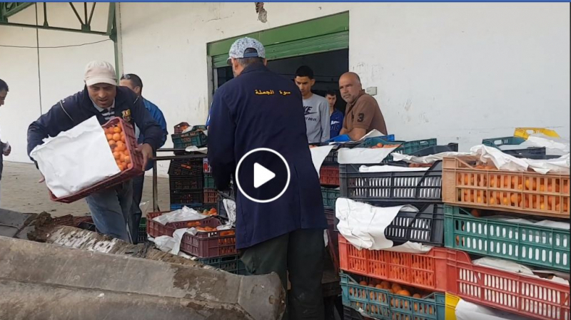 Destruction d'abricots à Kairouan : le vrai du faux