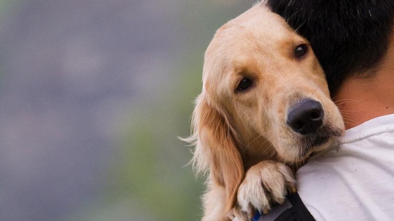 États-Unis : un chien se sacrifie pour sauver la vie de son maître