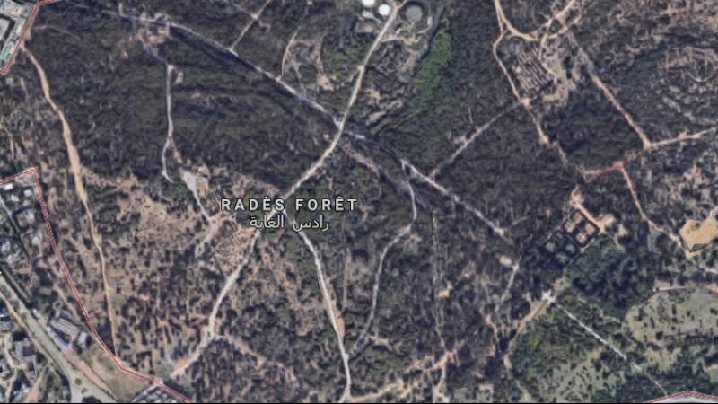 forêt de Rades