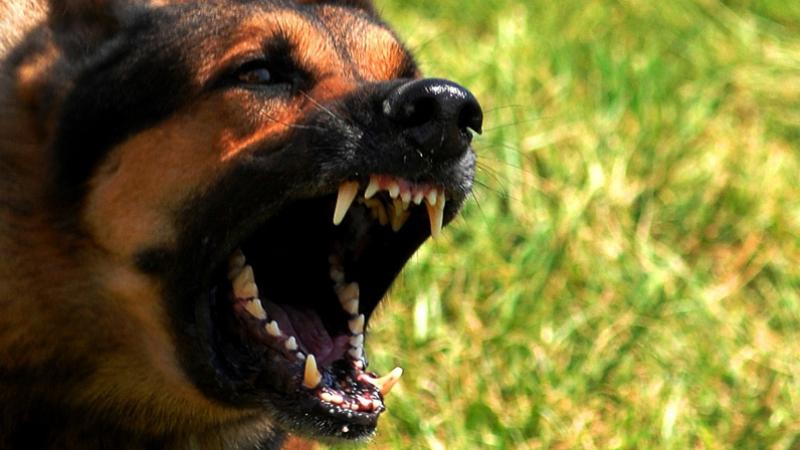 Haffouz: attaquées par un chien, deux octogénaires hospitalisées
