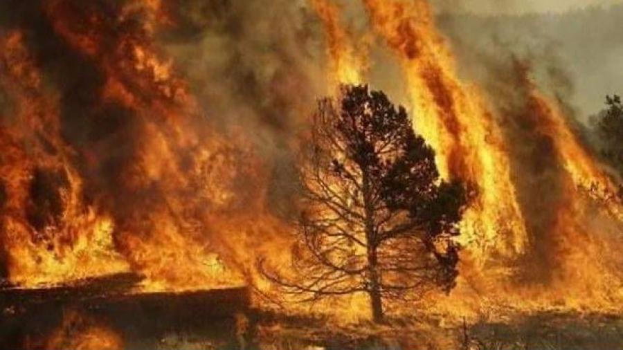 Incendie à Jendouba: aucune perte humaine n'est à déplorer