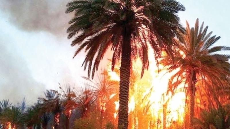 incendie palmiers