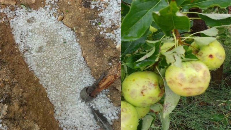 Jendouba : Chute de grêle causant des dégâts à plusieurs cultures