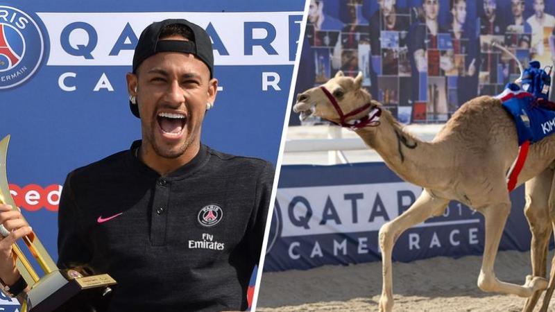 Qatar: Neymar remporte une course de dromadaires