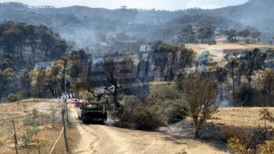 Seliana : L'incendie à Jbal Sariou maîtrisé
