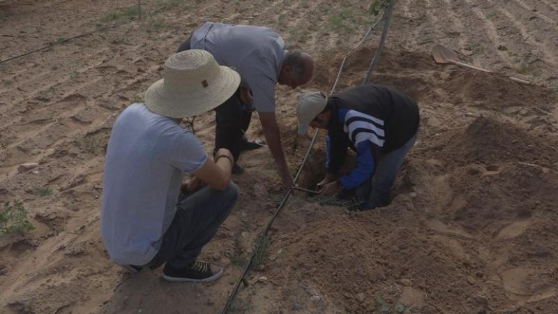 Un agronome tunisien invente un irrigateur souterrain